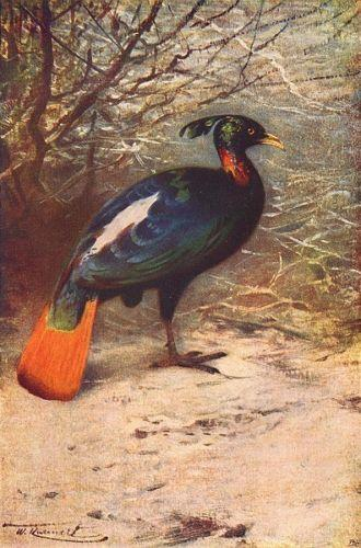 peinture ancienne 1907