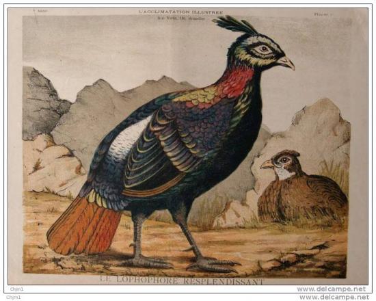 gravure ancienne XIXème