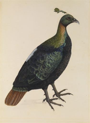 gravure XIXème