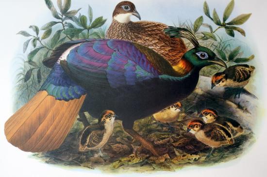 magnifique peinture de 1872 par Joseph WOLF
